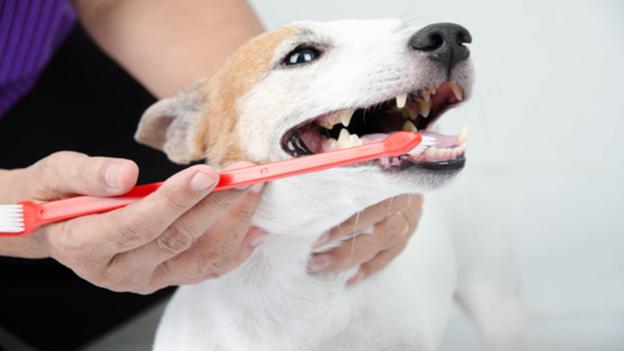 dog dental hygiene tips from DuPont Veterinary Center
